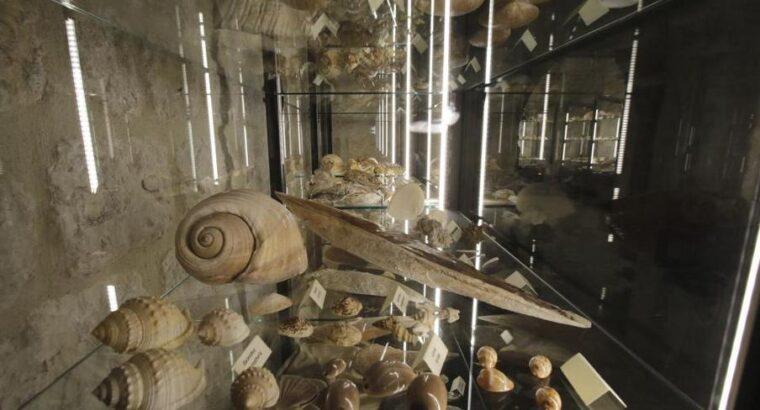 Malakološki muzej, Makarska